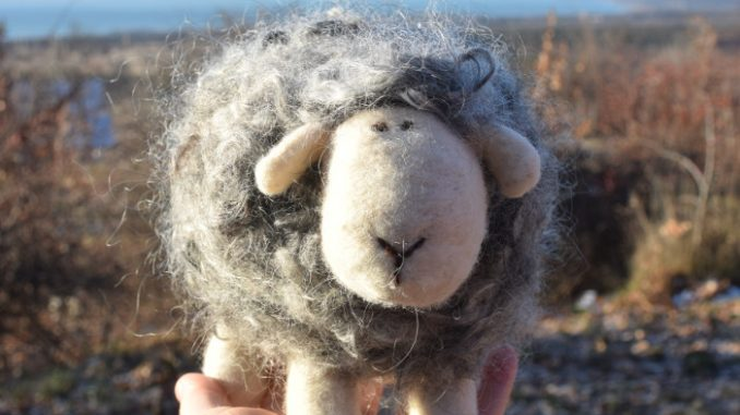 gyapjú bárány